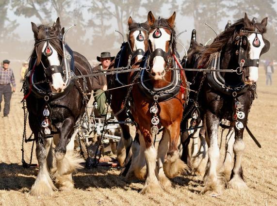 horses-2239457_1280