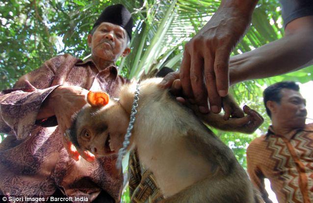 monkeyinthailand